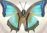Бабочка размер 140х97 см (4  листа) №73