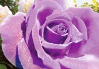 Ультрафиолет- размер 140х97 см 4 листа