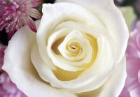 Белое чудо -размер140х97 см (4 листа)